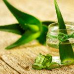 Comment maigrir avec la pulpe d'aloe vera