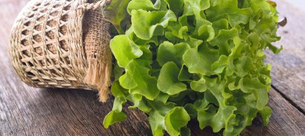 la-salade-feuille-de-chene-un-allie-minceur-pour-moins-de-calories